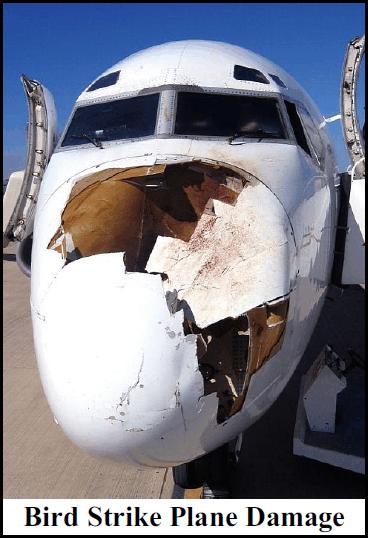 bird-damage