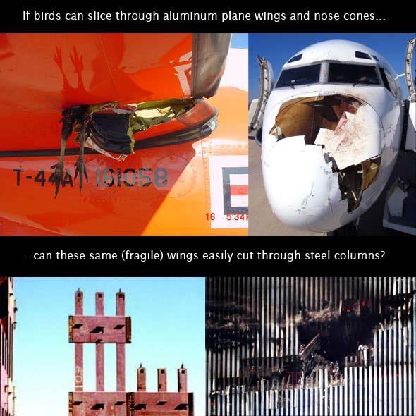 birds-911